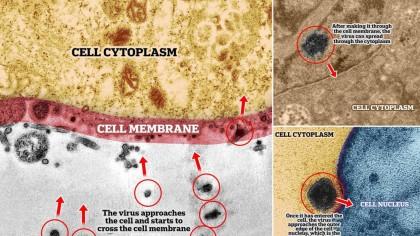 Descoperire colosală a cercetătorilor despre virus! Ce se vede clar la microscop