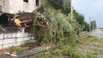 Furtună puternică în Tulcea. Pomii au căzut peste mai multe mașini staționate. FOTO