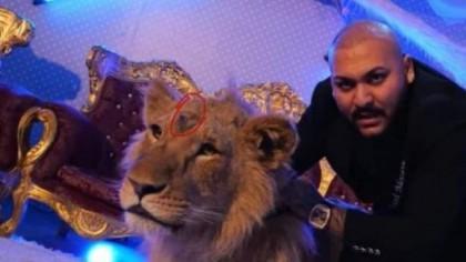O tânără a ajuns la spital, mușcată de cap! Imagini de la ferma de unde Dani Mocanu a împrumutat un leu!