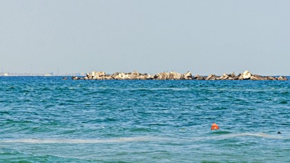 Descoperire uimitoare în Marea Neagră. O specie rară din Pacific a fost găsită pe malul mării noastre. Explicaţiile specialiştilor